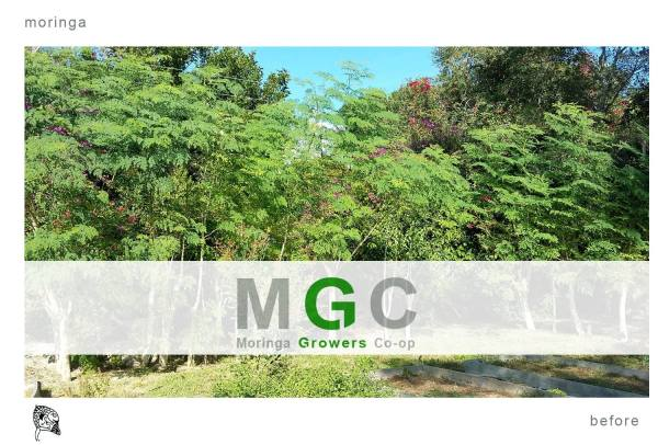 Moringa Growers Co-op